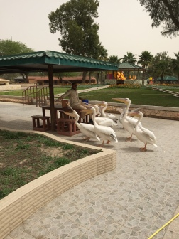 Al-Areen Wildlife Reservation