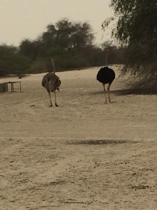Al-Areen Wildlife Reservation