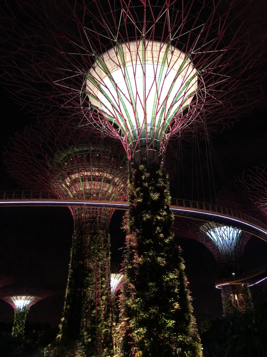 Gardens by the Bay - the Supertrees Grove