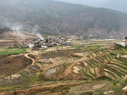 Rice fields in Punakha Valley